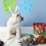 Easter Presents: For the Pets